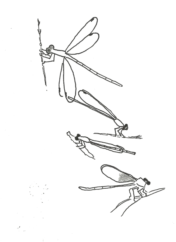 Types of Damselflies1. Spreadwing2. Dancer3. Bluet or Forktail4. Broadwing