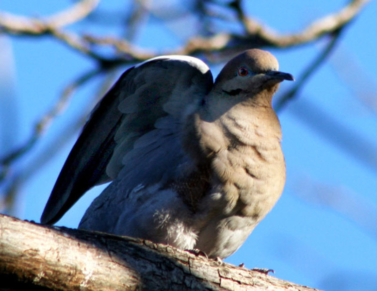 birds their habits and behaviour essay Older males, those past their physical  the cough-bark and cough-geck may be heard in response to unknown humans or low-flying birds  olive baboon (papio.