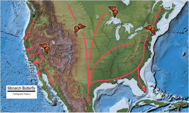 Figure 2. Monarch Butterfly Fall Migration Patterns.  Base map source: USGS National Atlas